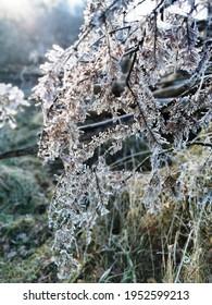 Eis auf Ästen eines Baumes