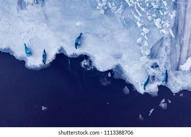 Ice sheet with Seals sleeping