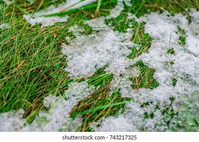 Ice and snow melting on a juicy green grass during a thaw.