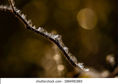 Ice sparkles on a piece of a stem from a plant