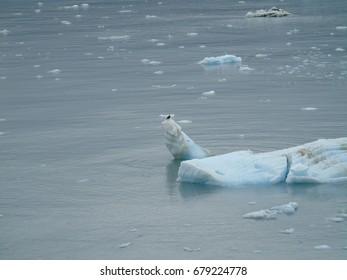 Iceberg from alaska