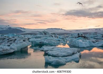 Icebergs floating in Jokulsarlon glacier lagoon lake at sunset. South Iceland