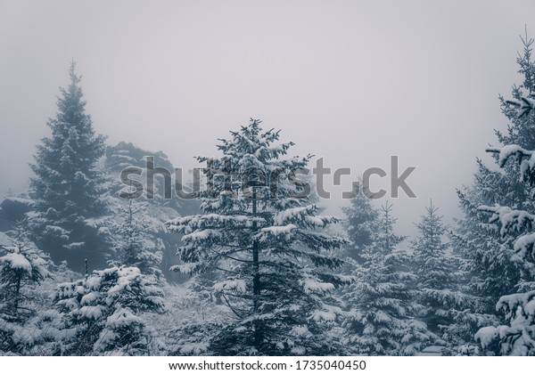 Ice-cold winter landscape in the Harz National Park