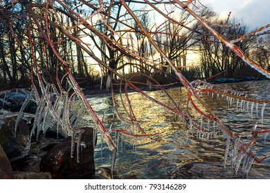 iced branches of a tree on the river bank