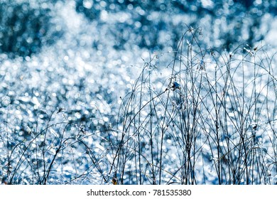 Iced grass on a winter day