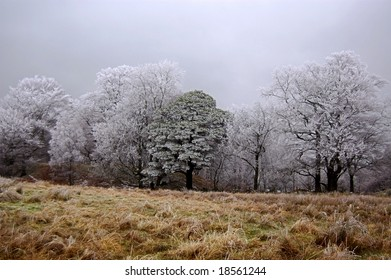 Iced trees at the edge of a forest on a winters morning