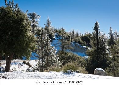 Iced trees near Idyllwild, CA, USA