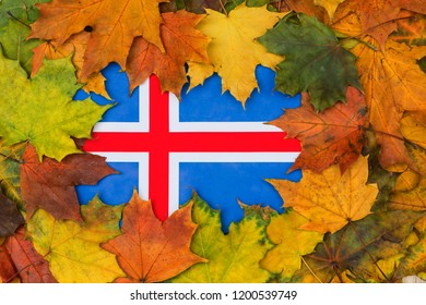 Iceland flag buried in yellow maple leaves. Autumn texture.