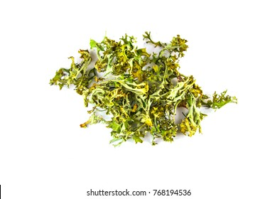 iceland moss on a white background