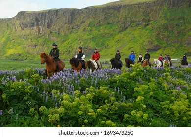 ICELAND, VIC - JUNE 25, 2019: Summer walk in Vic, horseback ride near the city beach