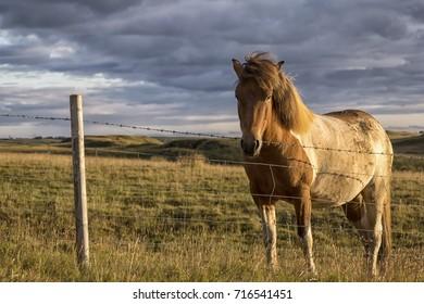 Horse Breeding Images, Stock Photos & Vectors   Shutterstock