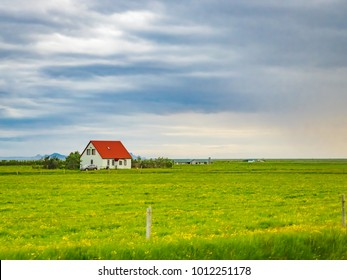 Icelandic view of green field with yellow flowers and houses on a seaside in Iceland