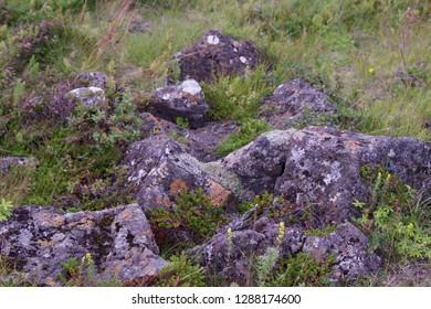 Icelandic volcanic rock formation