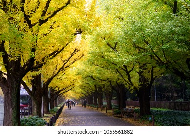 Icho Namiki/Ginkgo Avenue, Meiji Jingu Gaien Park, japanese people and tourists have a nice trip in  the autumn colors of The ginkgo tree is a yellow discoloration