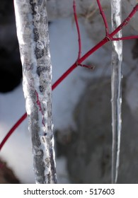 Icicle and Tree