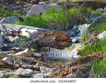 Icicles Hanging from a Log Across the South Fork of the Santa Ana River, California, May 2019