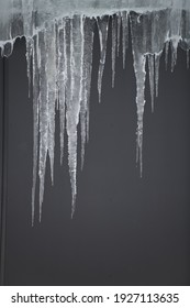 Icicles hanging from roof melting in warmer spring weather against grey background frozen in colder temperatures showing climate change in winter vertical format room for type