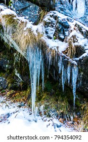 icicles on the forest