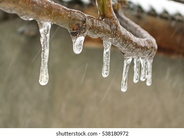 Icicles on a tree branch on background of the wall and falling sleet (closeup)
