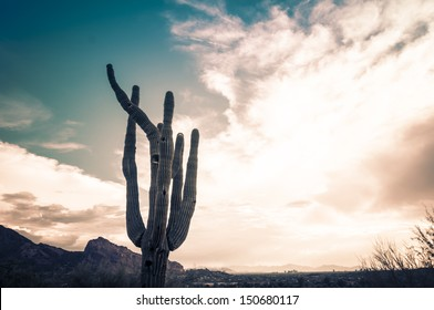 Iconic Saguaro Cactus tree with landmark of Camelback Moutain and Phoenix downtown in background.  With dramatic cloudscape.