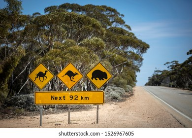 Iconic sign advising drivers of the possibility of camels, kangaroos and wombats as traffic hazards on the Eyre Highway (Nullarbor Plain)
