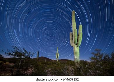 Iconic Sonoran Desert Saguaro columnar cactus, Carnegiea gigantea, under starry Arizona night sky with circular startrails