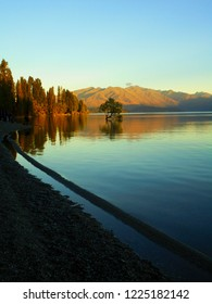 iconic Wanaka willow tree growing in Wanaka lake during early autumn morning, Wanaka town, the New Zealand's most photographed tree, Southern Alps in background