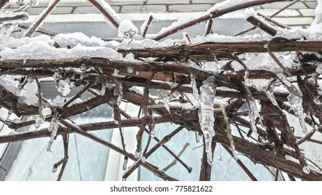 icy branches of a tree under the snow