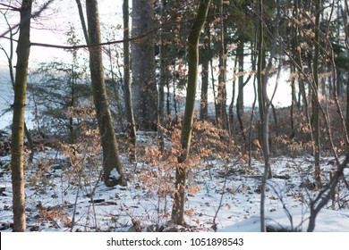 icy broadleaf forest in early winter morning in the woods
