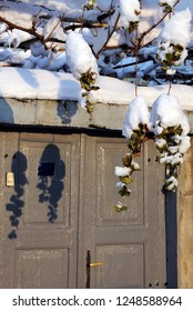 Icy grapes and their shadows on the door