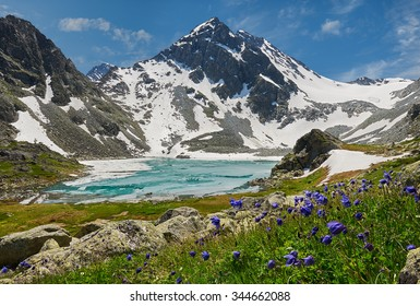 Icy lake with colorful flowers and the mountain peaks in the background, Russia, Siberia, Altai mountains, Katun ridge.