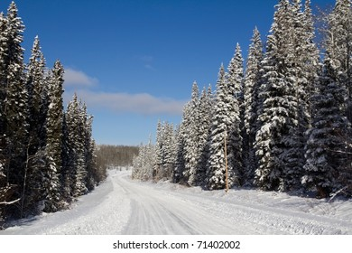 Icy road with snow covered pines