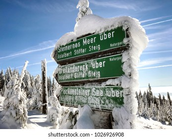 Icy shield, nature reserve Hochwald, Bavarian Forest, Germany