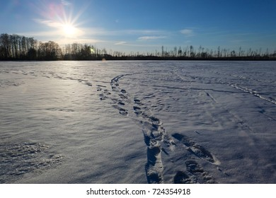 The icy surface of a forest lake