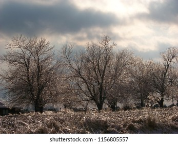 Icy tree landscapes.