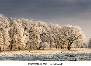 icy trees in the Lueneburg Heath, ice, hoarfrost, winter, Lower Saxony, Germany