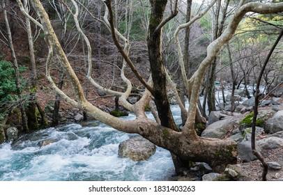 Ida Mountain National Park, Edremit, Turkey - Shutterstock ID 1831403263