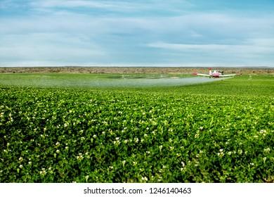 Idaho Falls, Idaho, USA August 16, 2012 An low angle view of a crop duster spraying green farmland.