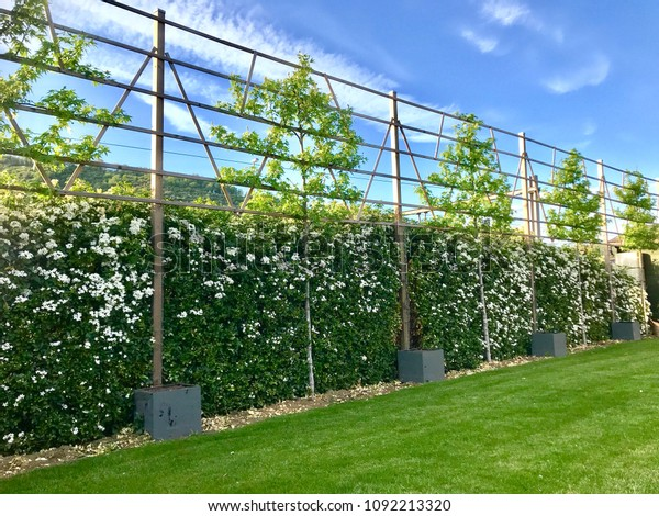 Idea concept to picket fence with wood and growth a tree for home or house decoration  outside with green lawn.