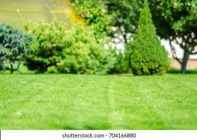 ideal green lawn back yard and almond