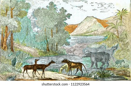 Ideal landscape of the eocene period, vintage engraved illustration. From Natural Creation and Living Beings.