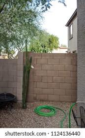 Idle garden watering hose coiled on gravel next to night blooming Cereus cactus in desert style xeriscapied backyard, Phoenix, Arizona
