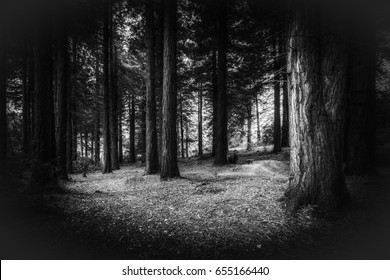 idless woods dark and mysterious near trio in cornwall england uk. Black and white
