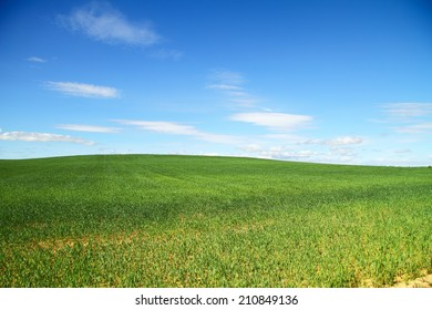 Idyllic agricultural landscape with green field and blue sky, Valladolid, Castilla y Leon, Spain