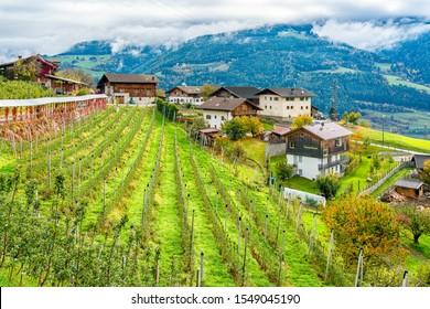 Idyllic autumn with apple field near Chiusa, Province of Bolzano, Trentino Alto Adige, Italy.