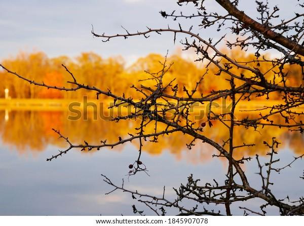 Idyllic autumn landscape riverside orange trees