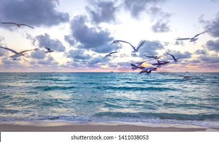 Idyllic beach at early morning time during sunrise. Miami South Beach with some seagulls in the beach, Florida, USA. Waves and beach time in a summer sunny day.
