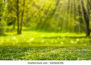 idyllic blooming meadow in sunlight