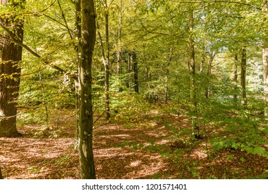 Idyllic colorful forest landscape in autumn time