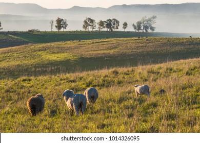 Idyllic countryside landscape of Batovi Hill, Tacuarembo in north-central Uruguay